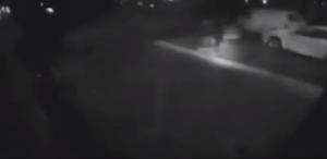 Bus finisce fuori strada abbatte cinque alberi e un palo della luce