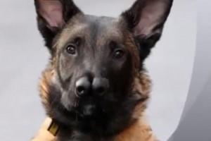 Snuffles, il cane con due nasi ha trovato casa