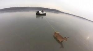 Cervi liberati dal lago ghiacciato