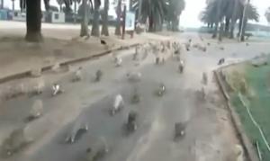 Decine di conigli affamati intorno ad una ragazza nel parco
