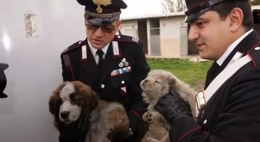 Aversa: 17 cuccioli di cane carbonizzati dopo incendio capannone