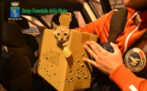 Traffico di cuccioli dall'est: arrestati allevatori e veterinario a Milano