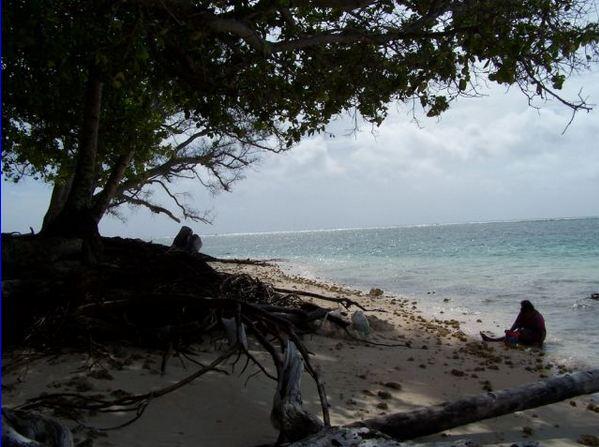 Sopravvive mangiando tartarughe su isola deserta. Josè Ivan, novello Castaway
