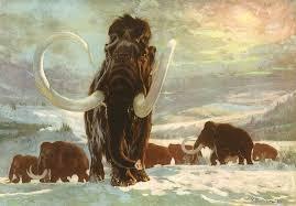 Piante da fiore in Artico fino a 10mila anni fa: morte loro, estinti i mammut...