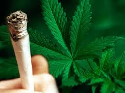 """""""Fumatori di marijuana cercasi"""", e l'ospedale viene preso d'assalto"""
