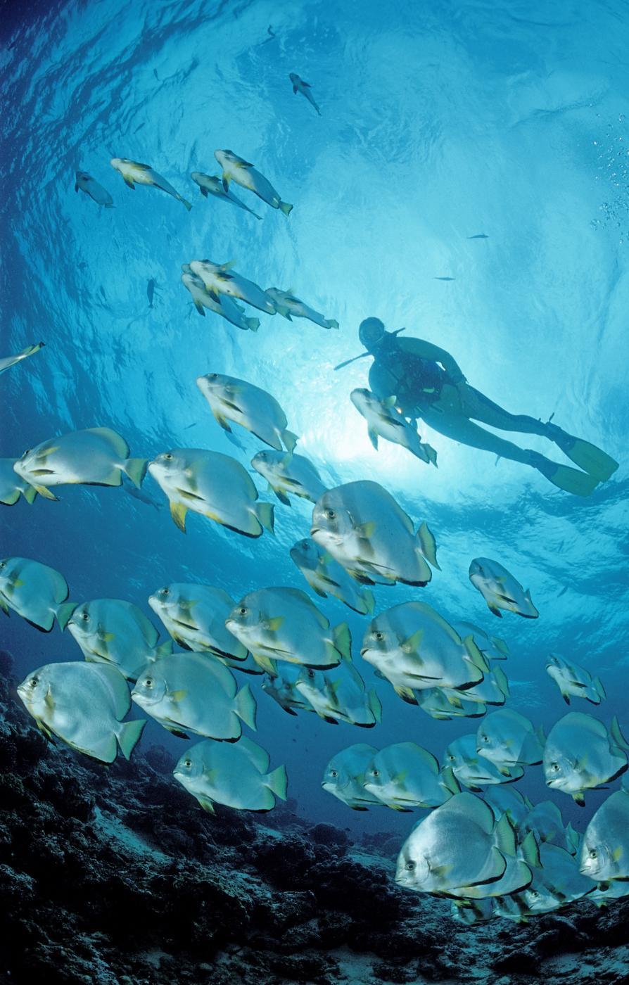 Oceani? Dieci volte più ricchi di pesce del previsto