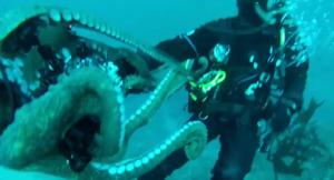 Polpo gigante ruba la telecamera subacquea