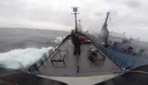 """Sea Shepard, la nave """"Bob Barker"""" attaccata da baleniera giapponese"""