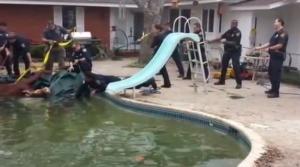 Toro cade nella piscina di una casa: salvato dai vigili del fuoco