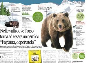 """Gli orsi fanno paura in Alto Adige: """"Portateli via o gli spariamo"""""""