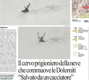 Il cervo prigioniero della neve salvato da un cacciatore a Belluno