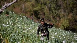 Nord del Myanmar, gruppi etnici armati in una piantagione di papavero da oppio