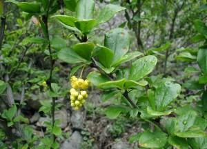 Abortire semi per evitare infestazioni parassiti: anche le piante sanno decidere
