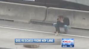 Cane ferito sull'autostrada: ragazzo gli porta un panino e lo salva