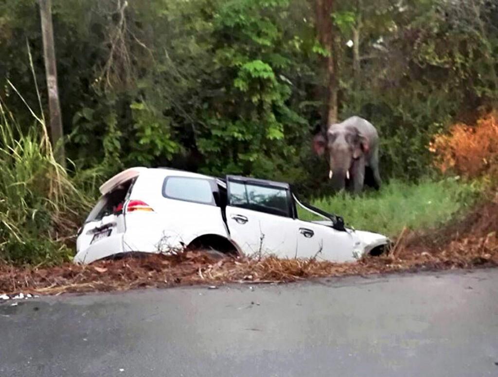 Thailandia, tre veicoli finiscono contro tre elefanti selvatici