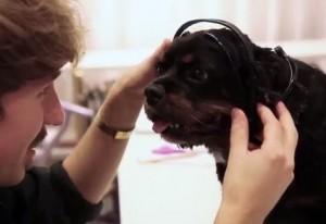 """""""No more woof"""": per sapere cosa pensa il vostro cane quando abbaia"""