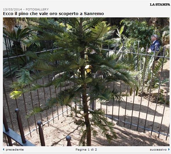 Sanremo, è vivo il pino estinto 2 milioni di anni fa (foto)