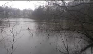 Svezia, si getta nel lago gelato per salvare un'anatra