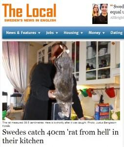 Topo gigante di 40 cm catturato in una casa in svezia foto blitz quotidiano - Come catturare un topo in casa ...