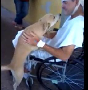 Cane aspetta otto giorni fuori dall'ospedale il padrone