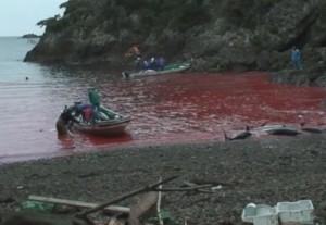 The Cove, scene inedite sulla caccia ai delfini in Giappone