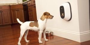 """Video Dog Phone"""": il telefono che ti permette di videochiamare il tuo cane"""