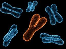 Cromosoma Y si atrofizza: se il sesso maschile rischia estinzione...