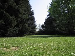 Un terzo del territorio italiano è verde: in 50 anni alberi raddoppiati