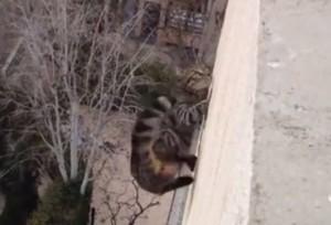 Gatto cade nel vuoto dal terzo piano: si rialza e scappa via
