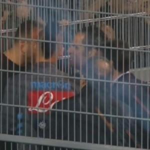 """Scontri Roma, Coni contro Lega Calcio e Figc: """"Non è stato fatto nulla"""""""