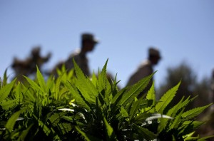 Colorado: marijuana medicinale anche per i bambini