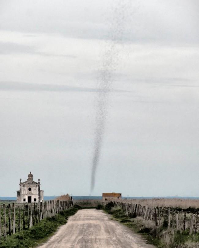 Portogallo, lo sciame di zanzare alto mille metri che assomiglia a un tornado