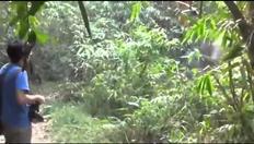 Elefante corre verso il turista poi si ferma e cambia direzione