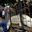 Cina, torna il festival della carne di cane di Yulin (foto, video)