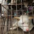 Cina, torna il festival della carne di cane di Yulin (foto, video) 2