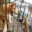 Cina, torna il festival della carne di cane di Yulin (foto, video) 3