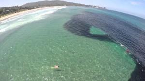 San Diego, si tuffano nell'oceano e avvistano enorme branco di acciughe
