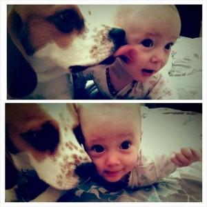 Charlie il beagle ruba giocattolo a baby Laura. In colpa, la riempie di regali