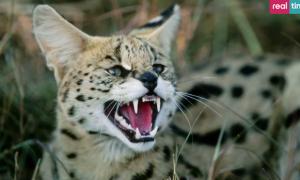 """""""Il mio gatto è indemoniato"""": il reality di Real Time impazza su Twitter"""