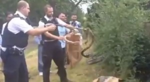 Londra, poliziotti catturano due boa constrictor in un parco giochi