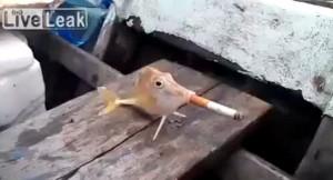 Il pesce costretto a fumare una sigaretta