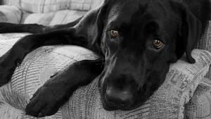 Rientro a scuola e depressione: a soffrire di più non i bimbi, ma i cani...
