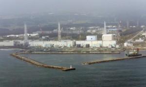 Fukushima: farfalle e uccelli malformati dalle radiazioni dopo 3 anni