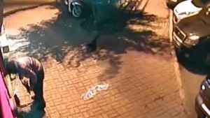 Istanbul, uomo massacra gattini: ripreso in un video