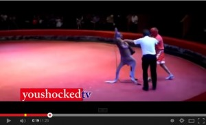 Uomo contro canguro, il match di boxe che è un classico di Youtube VIDEO