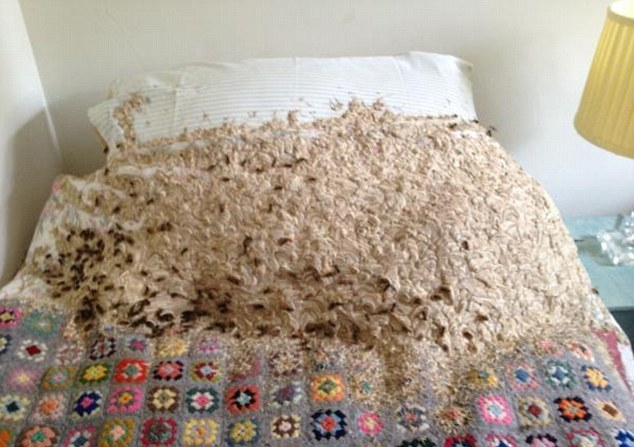 Gb enorme nido di vespe in una camera 5mila insetti sul - Una valigia sul letto streaming ...