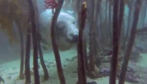Incontri ravvicinati uomo-animale: il video
