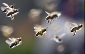Milano. Sciame di vespe attacca 6 perone: 4 bimbi e 2 donne in ospedale