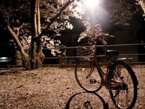 Roma, molestata mentre torna a casa in bici: arrestato algerino
