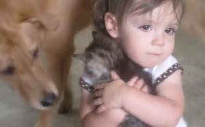 La bimba abbraccia il gatto, il cane è geloso (video)